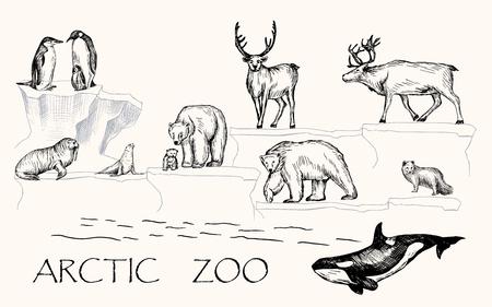 Vector illustratie. Getekende arctische dieren in de vorm van een pen: pinguïns, ijsberen, walrussen, zeehonden, poolvossen, rendieren, orka's. Stockfoto