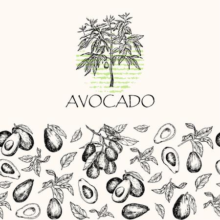 벡터 일러스트 레이 션. 격리 된 아보카도 과일 나무, 아보카도 나뭇잎과 분기합니다. 원활한 패턴 요소입니다.