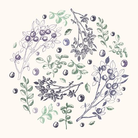 Vector illustration, hand drawn blueberry branches and leafes compound into the circle Ilustração
