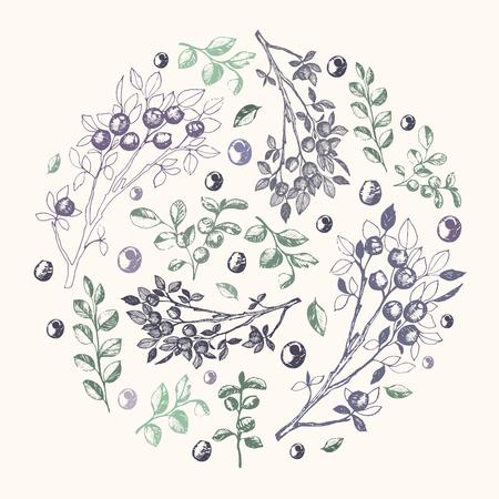 Vectorillustratie, hand getrokken bosbessentakken en leafes samenstelling in de cirkel
