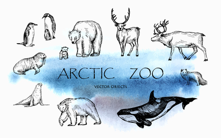 Vector illustration. Pen drawn arctic animals set: penguins, polar bears, walrus, seal, polar fox, reindeers, orca whale. Vector sketched objects. Vettoriali