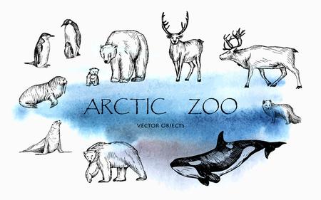 Vector illustration. Pen drawn arctic animals set: penguins, polar bears, walrus, seal, polar fox, reindeers, orca whale. Vector sketched objects. Zdjęcie Seryjne - 93007170