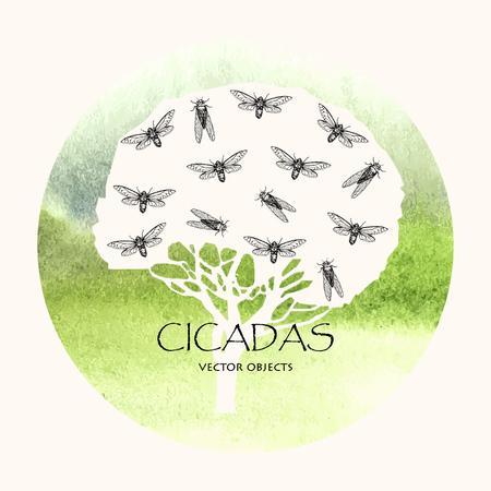 Vector illustration. Cicadas . Vector pen style sketch.