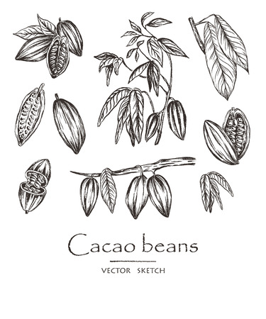 Vector illustration. Sketched hand drawn cacao beans, cacao tree leafs and branches. Chalk style vector set. Vettoriali