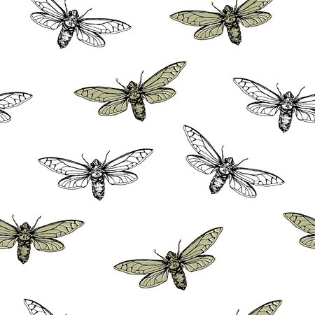 Vector illustration. Cicadas . Vector pen style sketch. Element of seamless pattern. Paper design.