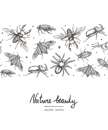 Vector illustration. Chalk style vector objects set. Beetles, mantis and spider. Element of seamless pattern.