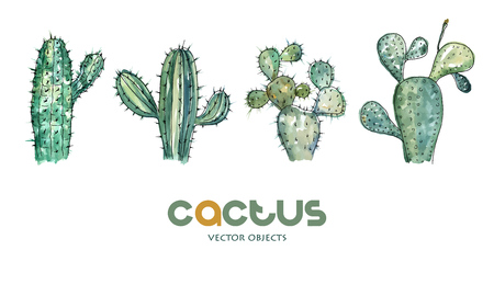 Vector illustration. Cactus collection. Pen drawing with watercolor style background. Vector objects set. Ilustração