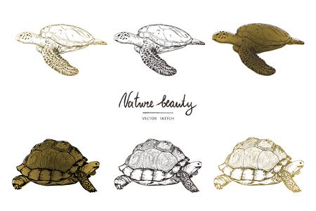 Ilustración de vector. Bosquejo del vector del estilo de la pluma. Tortugas y tortugas. Conjunto de objetos vectoriales.