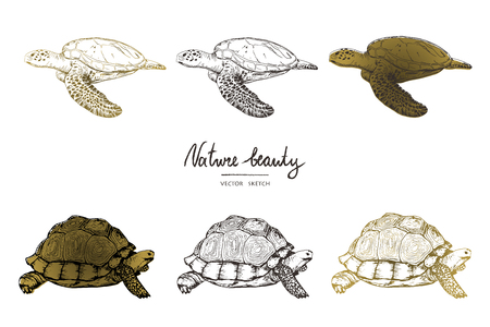 Vector illustration. Pen style vector sketch. Terrapins and turtles. Vector objects set.