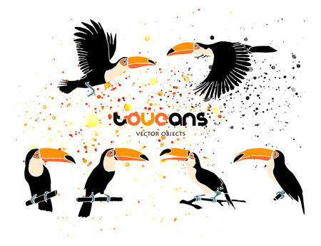Vector illustration. Toucans set. Vector objects.