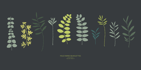 Vector silhouettes collection. Set of field flowers, herbs