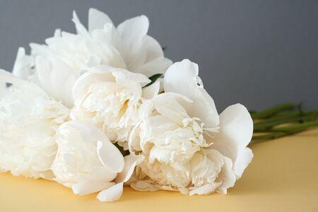 White fluffy flowers bouquet on yellow and grey background Zdjęcie Seryjne