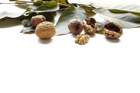 Walnut kernels and whole nut with tree leaf on white background with free space