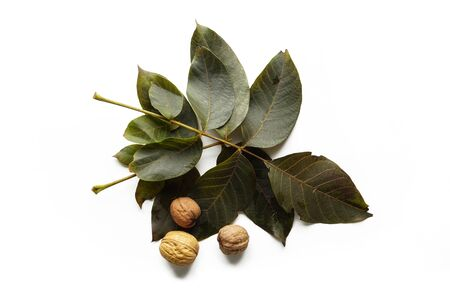 Whole walnuts with tree leaves isolated on white background