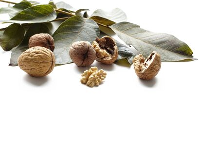 Walnut kernels and whole nut with green tree leaf on white background