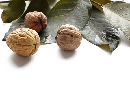 Ripe walnuts with tree leaf isolated on white background