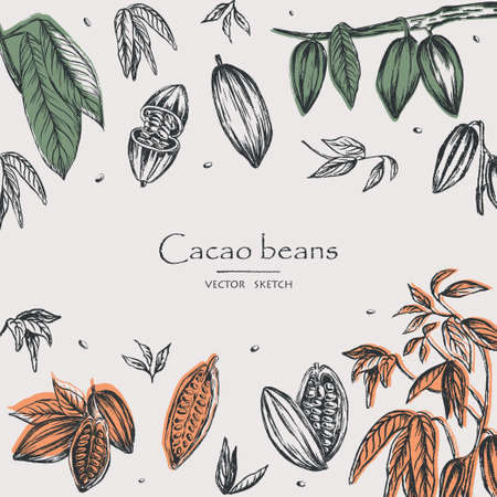 Sketched hand drawn cacao beans, cacao tree leafs and branches. Chalk style vector illustration