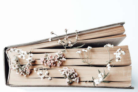 Old book with field flowers as bookmarks isolated on white background. Photo Archivio Fotografico