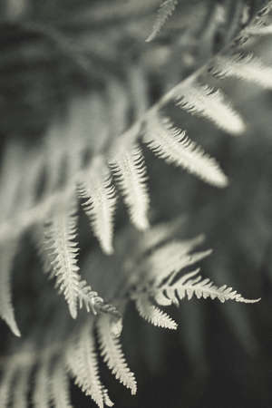 Fern leaves silhouettes. Art photography for an interior poster, print