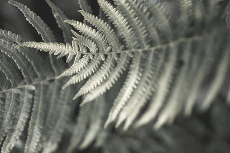 Fern leaves silhouettes. Art photography for an interior poster, print, cover