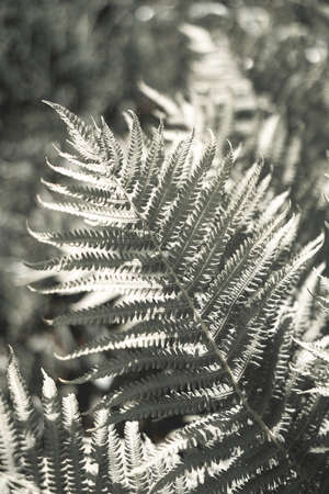 Fern leaf, forest foliage . Art photography for an interior poster, cover print