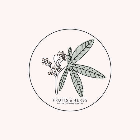 Logotype element. Part of plant with berries drawn in lines Vettoriali