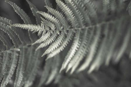 A bush of a young beautiful green fern Archivio Fotografico