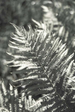 Fern leaf, forest foliage . Art photography for an interior poster, cover print. Archivio Fotografico