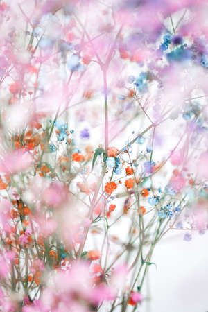 Colorful gypsophila airy masses of small flowers. Blurred photo background Archivio Fotografico