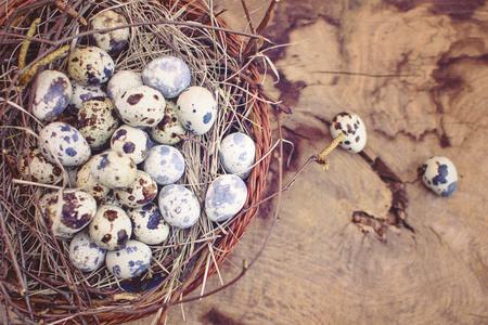 huevos de codorniz: huevos de codorniz en un cuenco de madera sobre un fondo gris