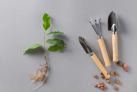 houseplant sprouts and garden tools set on gray background.