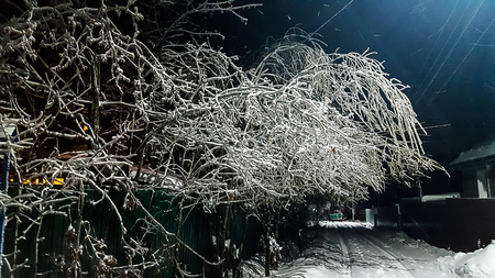 Freezing rain night. Outside the city all the trees are covered with a layer of ice. You can use as an illustration for winter or natural anomalies.