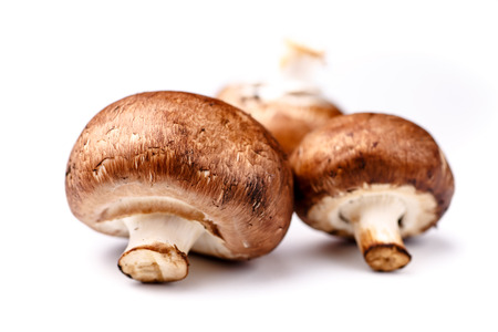 agaricus: Royal Agaricus (Agaricus bisporus, or Portobello)  lying on a white background. Not isolated with shadow.