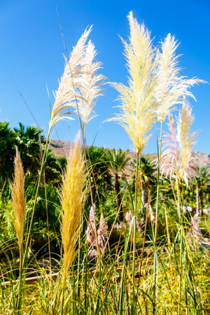 Wisps of grass on a background of mountains and blue sky. Stock Photo