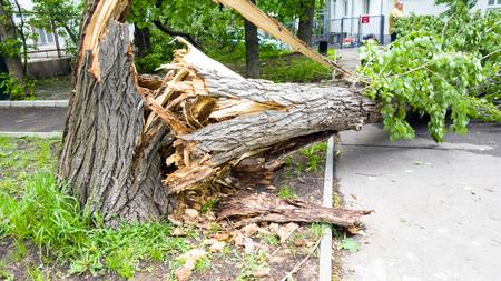 O rescaldo de um furacão. Árvores quebradas, sinais de trânsito caídos.