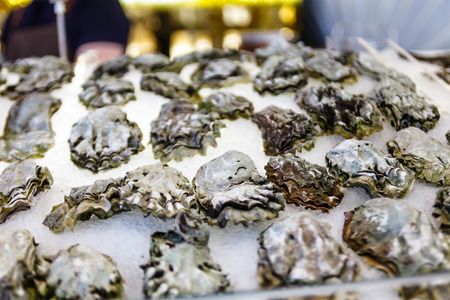 Fresh oysters lying on the ice. Stock Photo