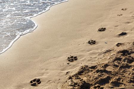 Dog tracks on the sandy shore Stok Fotoğraf