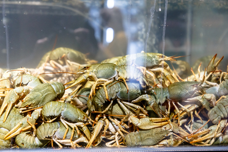 Live crayfish in the aquarium in the store Imagens