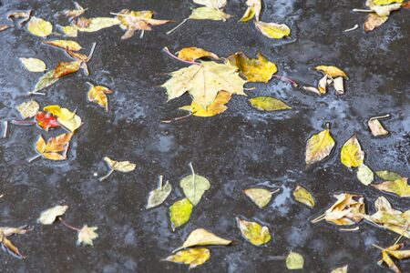 Yellow leaves lie on the wet asphalt. Autumn, rain. Reklamní fotografie
