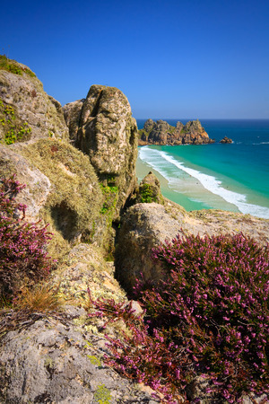 porthcurno: Heather on the cliffs over Porthcurno beach, Cornwall, UK.