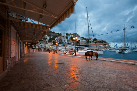 mules: Mules on the quay in the harbour of Hydra