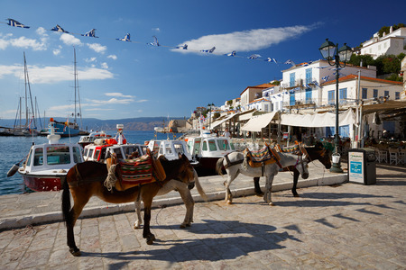 quay: Mules on the quay in the centre of Hydra waiting to be hired