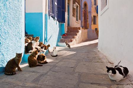 Cats in a street of Mandraki village on Nisyros island. Фото со стока