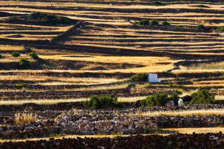 Terraced fields and stone walls on Kimolos island in Greece.