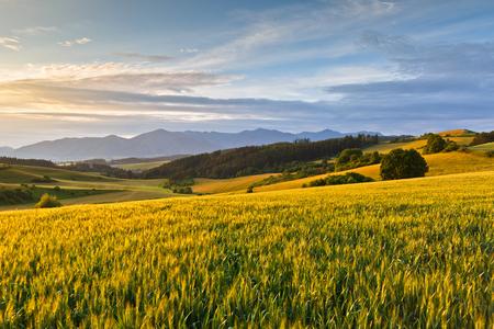 Rural summer landscape of Turiec region, central Slovakia.