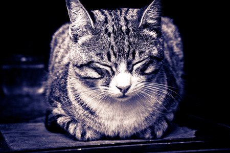 Sleeping dashed cat photo
