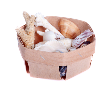 coral bark: Flat wooden box full of seashells on a white background