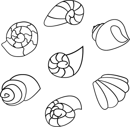Set of shell illustration on white background