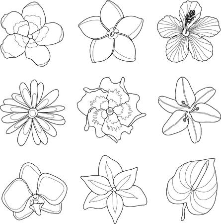 strelitzia: Vector illustration of tropical flowers line set