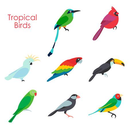 Vector illustration of tropical birds icon Illustration